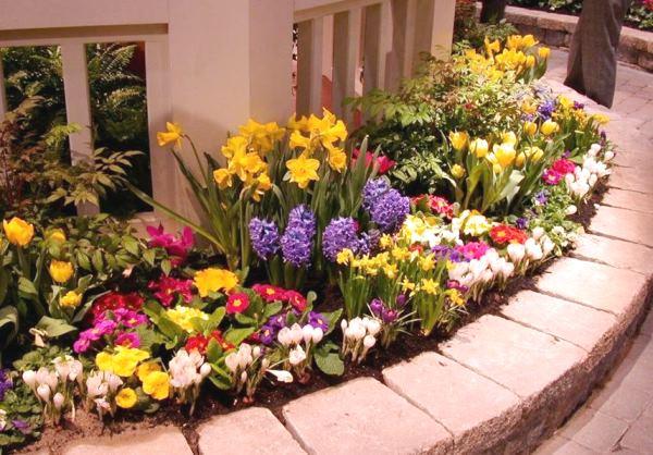 бордюрные цветы фото 13