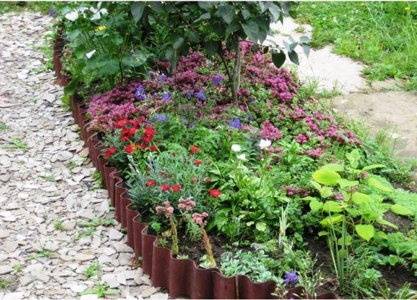 бордюрные цветы фото 14
