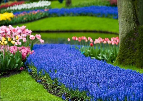 бордюрные цветы фото 2