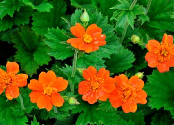 бордюрные цветы фото 5