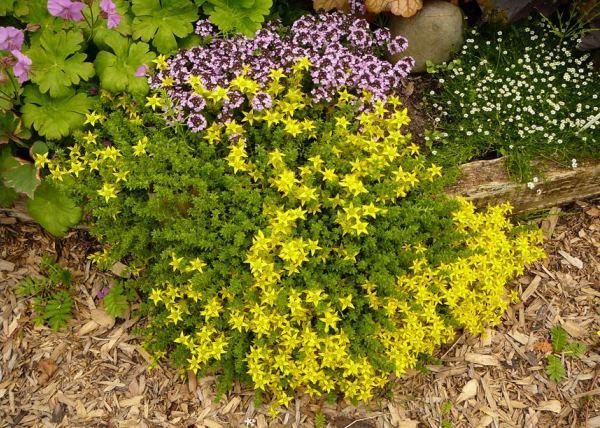 бордюрные цветы фото 6