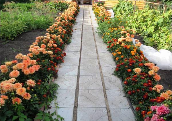 бордюрные цветы фото