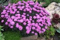 многолетние кустарники цветущие все лето фото и названия