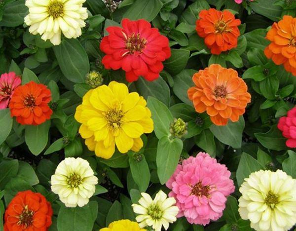 цветы в палисаднике фото 11