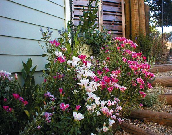 цветы в палисаднике фото 3