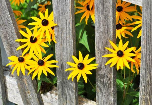 цветы в палисаднике фото 6