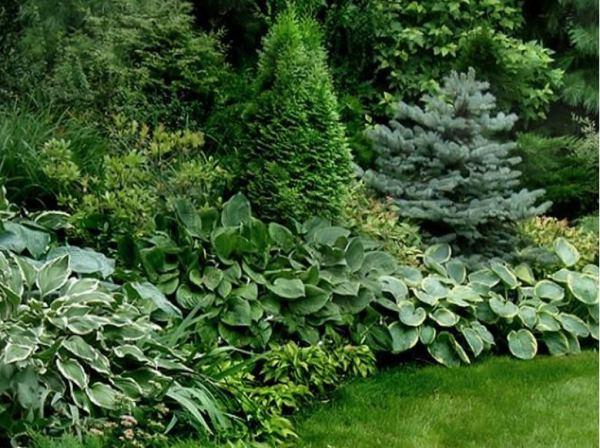 композиции с хостами в саду фото