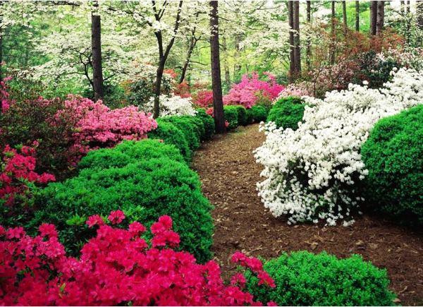 кустарники цветущие все лето фото 19