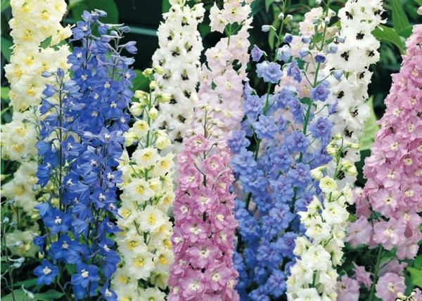 Многолетние цветы для Урала фото и названия