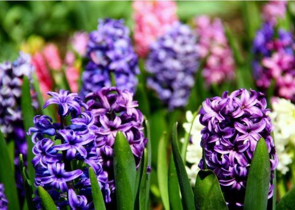растения для альпийской горки фото 9