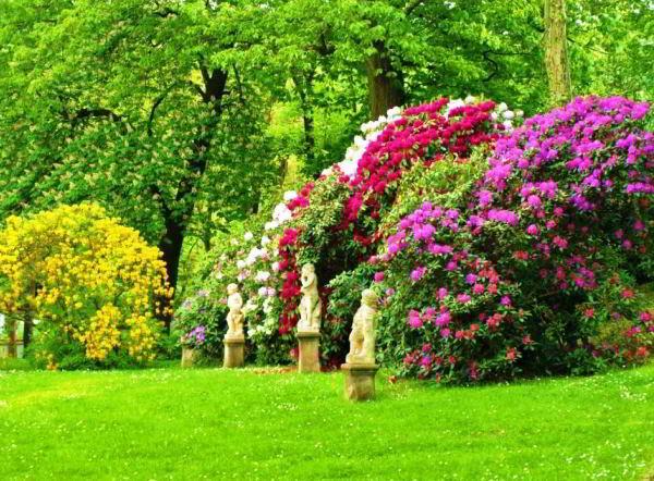 цветущие кустарники для сада фото 2