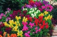 цветы садовые многолетние фото и названия