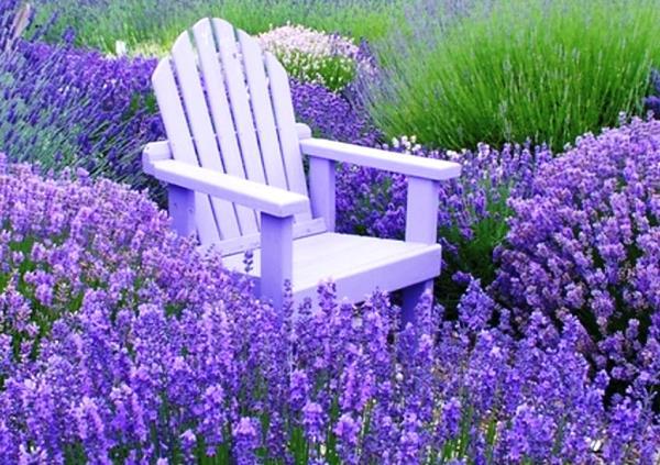 низкорослые цветы для клумбы фото 2